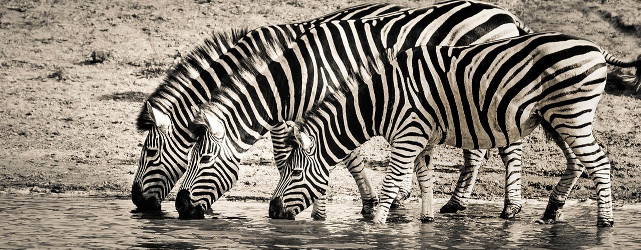findaabningstider.dk Knuthenborg Safari åbningstider